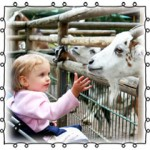 young child petting a goat
